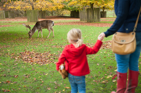 9 ways to embrace the season with the National Trust